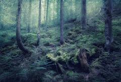 Fairy spring forest with green fog in the morning Stock Photos