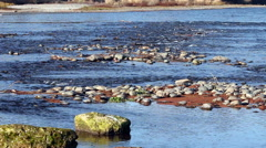 River Running Over Rocks With Ducks And Other Birds Stock Footage