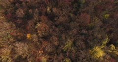 out of the fairy-tale forest. beautiful nature in autumn - stock footage