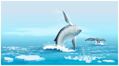 Whales in the Northern Ocean Stock Illustration