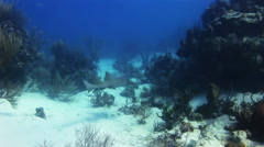 Shark swimming on the reef in search of food. Stock Footage