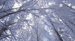Snow falls from tree to super slow motion Stock Footage