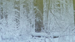 Trunks of trees and grasses covered with snow-slow motion Stock Footage