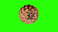 Stock Video Footage of Disclosure of pine cones green screen, (Pinus L.)