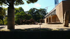 Herd of elephants eating food on sunny summer day. Feeding time in Berlin Zoo Stock Footage