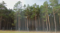 Forest on the roadside, view from fast moving car. Driving on interstate highway Stock Footage