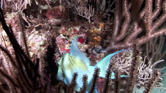 Blue Fish go to bed at the coral. Stock Footage