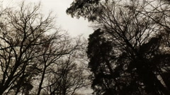 Trees in the Dark Mood Weather in Forest Stock Footage