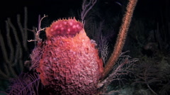 Beautiful polyp on a night dive. Stock Footage