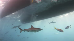 Shark searching for food under the bottom of ship. Stock Footage