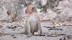 Monkey in Jungle, Thailand. Closeup Stock Footage