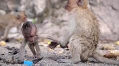 Closeup Monkey Outdoors Stock Footage