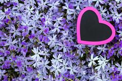 pink heart with a violett flower background - stock photo