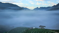 Tea plantation in morning view  ,Time lapse - stock footage
