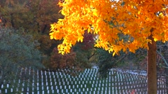Arlington Cemetery Stock Footage