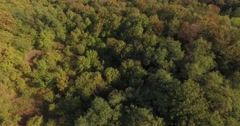 Flying out of the beautiful green forest in late summer Stock Footage