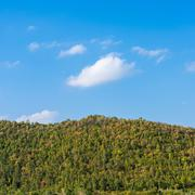 deciduous forest against the blue sky - stock photo