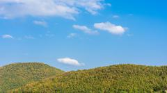 Deciduous forest against the blue sky Stock Photos