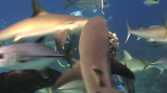 Diving show feeding sharks. The divers, sharks. Stock Footage