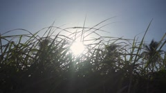 The Sun Shines Through Swaying Grass. Slow Motion - stock footage