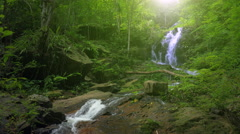 Wilderness of jungle rainforest with tropical green plants and waterfall cascade - stock footage