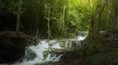 Jungle rainforest background with green plants vegetation and river cascades  Stock Footage