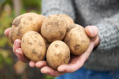 Man Holding Home Grown Potatoes - stock photo