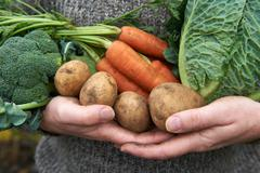Man Holding Fresh Produce Gathered From The Garden - stock photo