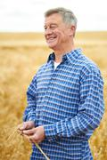 Farmer In Wheat Field Inspecting Crop Stock Photos