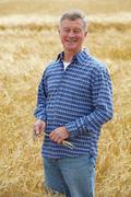 Farmer Inspecting Wheat Crop Stock Photos
