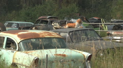 Auto junkyard in the forest, montage #2 Stock Footage