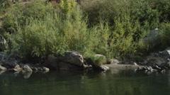 Drifting left past streamside rocks on vegetation on the Rogue River, Oregon Stock Footage