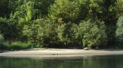 Drifting right past a sandy beach along a wooded riverbank - stock footage