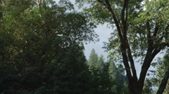 Gliding under a leafy canopy along the bank of an unseen stream Stock Footage