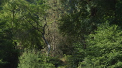 Gliding past trees along the bank of an unseen stream Stock Footage