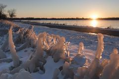 Ice Covered Plants Catch the Light of Sunset - stock photo