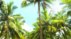 Palmtrees POV video with vivid green leaves on tropical island coast of Phuket Stock Footage