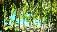 Exotic nature on shore of tropical island. Coconut palm trees summer landscape Stock Footage