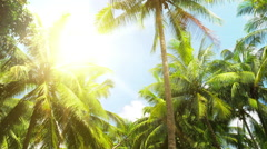 Scenic tropical nature background. Hot summer sun shines through palmtree leaves Stock Footage