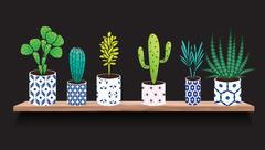 Succulents and cactus plants in pots - stock illustration