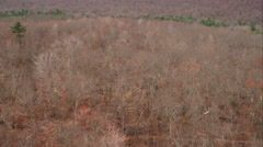 Leafless forest near Hartford, Connecticut. Shot in November 2011. - stock footage