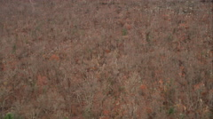 Over leafless forest, revealing Hartford, Connecticut in distance. Shot in - stock footage