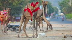 Camel riding in the streets of Jaipur Stock Footage
