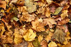 Dead leaves shot ideal for backgrounds Stock Photos