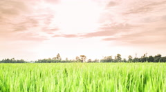 4K Time Lapse Beautiful Sunset On Rice Farm And Colorful Clouds Moving Stock Footage