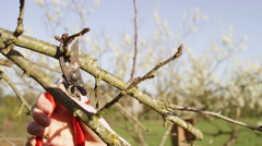 Young man pruning small branches from a tree Stock Footage