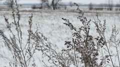 dry field grass in snow winter nature landscape - stock footage