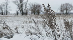 dry grass in snow field winter nature landscape - stock footage