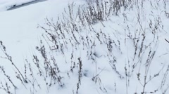 dry grass in snow winter nature field landscape - stock footage