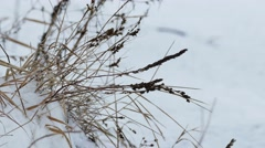 dry grass wind in snow winter nature field landscape - stock footage